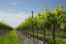 Vineyard Seasons / Beautiful shots from around Napa and Sonoma throughout the year.