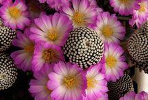 Kaktusz képek