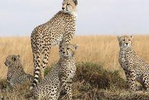 Los mamíferos + rápidos de la tierra