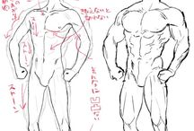 人体構造イラスト