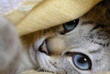 gatozz