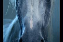 Horse mix