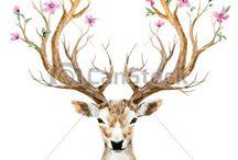 deer art, drawings
