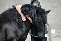 Horse - behaviour