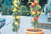 Gardening: pots, raised beds, etc / Gardening in confined spaces