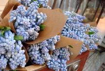 hyacinth wedding