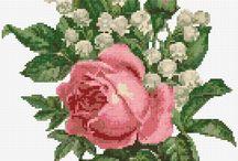 kvetiny - kaktus