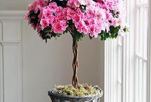 Kwiaty/Ogród