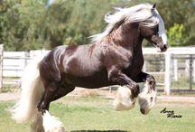 Free Spirits / Horses at play