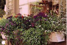 Window Boxes / by Gloria McMahon