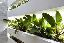 Green House - Plants etc.