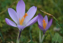 Fiori / Immagini di fiori e piante