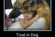 Dogs / Mis bbs