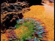 corals & fishy wishys