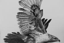 eagle,hawk