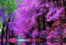 Natura minunata