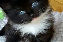 Miau!!!