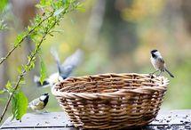 vtáci v prírode