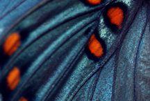 Aqua ailes de papillon