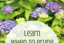 Garden / Pruning