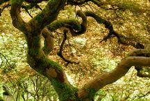 Beautiful & Strange Trees / Natures beauty