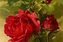 Róże w malarstwie