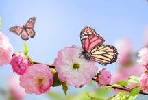 Çiçek & Bitki / Çiçek ,çiçek wallpaper duvar kağıtları,bitkiler