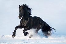 horsegold