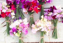 Summer Flower Fun / Summer & Flowers