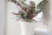 Garden House plants