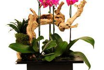 Gradinita de orhidee