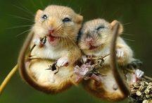 Little little animals