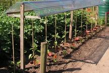 jardin - Potager