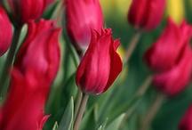Flowers& Gardening