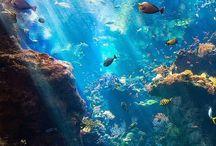 Vizek  élővilága / waters life / Csodálatos élőlények a vizekben!