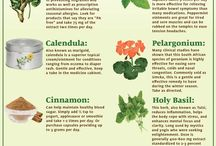 Herbs and More