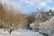 Winter at Limepark  / Winter at Limepark