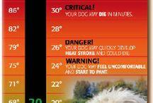 alerta calor animales
