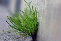 """Byhøst urban natur moodboard  / """"By + natur"""", """"bæredygtighed"""", """"menneskets forbindelse til naturen"""": Byhøst handler om at forbinde byboeren med den natur der omgiver dem og give adgang til noget af den tabte viden om og fornemmelse for naturen og årstidernes gang, som folk besad for 100 år siden. Derfor ønsker vi at Byhøsts grafik rummer elementer af byen, dens råhed og mødet med naturen."""