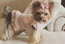 платья собак