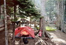 camping, woods, flannel / by Carly Stobbe