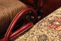 My Cat Kids / by Fangs, Wands & Fairy Dust