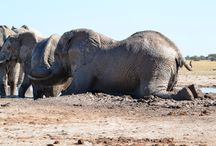 Wildlife Africa / Wildlife so accessible throughout Africa