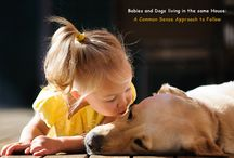 Dog Care Tips / Dog Care Tips