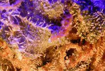 chronics THC / microscope 500x