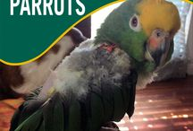 Parrot Feather Destructive Behavior Help / Do you have a parrot that plucks or mutilates?  Join our board for ideas and help on managing this sad and dangerous behavior.  Whether you're dealing with mild parrot feather plucking or severe self-mutilation, reach out with our on-line community and support parents of birds with feather destructive behavior. Feathers are optional:)