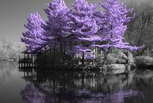 My Purple Passion / My passion for purple is revealed in these amazing photos of extraordinary purple places.