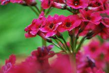 Bloemen in de Hortus