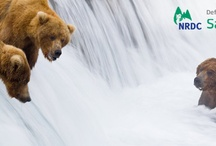 Facebook Timeline Cover Photos / Check out these fantastic NRDC BioGems nature cover photos! Show your support by downloading one and using it on your Facebook page! To follow us on Facebook, visit: https://www.facebook.com/BioGemsDefenders / by NRDC BioGems