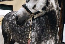 journey horse
